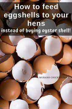 Feeding chickens egg shells instead of a oyster shell. Many chickens need extra calcium to help them make strong eggs, you don't need to spend money on supplements, just feed them cleaned eggshells. Eggs Quit wasting money on oyster shell! Raising Backyard Chickens, Keeping Chickens, Pet Chickens, Toys For Chickens, What Can Chickens Eat, Bantam Chickens, Urban Chickens, Chicken Garden, Backyard Chicken Coops