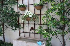 Stone trough fountain and trellis http://www.classiccasualhome.com/2014/05/inside-summer-garden.html