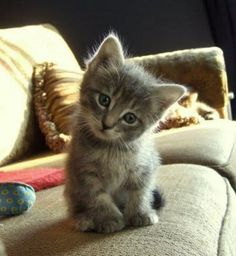 Your sofa cat