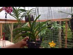 Devolva Orquídeas a Natureza - YouTube