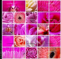 http://p1.pkcdn.com/mozaiek-roze-bloemen_400823.jpg