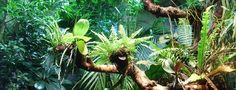 MaŘeNa- Polymery: Za tajemstvím deštných pralesů Tropický deštný les, též tropický deštný prales, je zalesněný biom s trvale teplým a vlhkým podnebím. Tento biom nalezneme zejména v rovníkových oblastech Země, byť některé okrajové enklávy mohou díky místním specifikům zasahovat až do subtropů. Nejrozsáhlejší je Amazonský deštný prales, dále Konžský ...