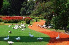El Rosedal, Jardines de Palermo, Buenos Aires - 513088