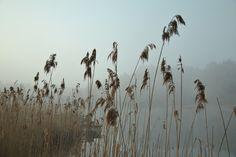 good morning fish by Marysia Ratajczak on 500px