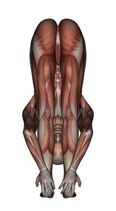Yoga Anatomy-Uttanasana