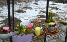 March 2014 March 2014, Google, Plants, Free, Plant, Planets