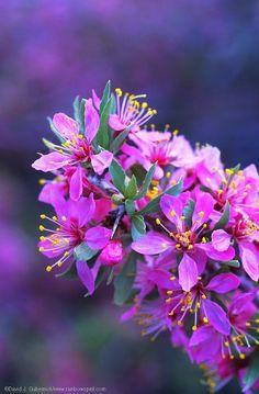 David J. Gubernick | Mono Basin Wildflowers
