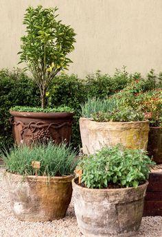 Herb Garden - containers of herbs Garden Urns, Garden Planters, Herb Garden, Tuscan Garden, Back Gardens, Small Gardens, Outdoor Gardens, Container Plants, Container Gardening