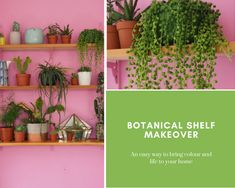Plants on Pink - a botanical makeover with Forest London - The Bright Blooms