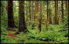 Картинки по запросу forest