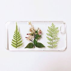 An iPhone case for the gardener in your life.