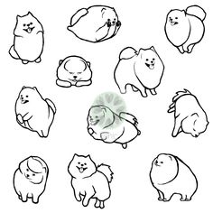 pomeranian pomeranians pommies pommie poms drawings illustrations for konic.pl