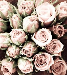 pale pink and pretty #flowers