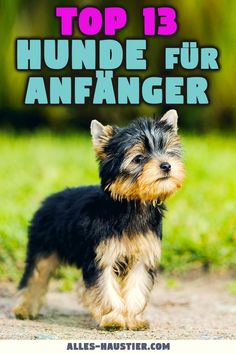 The best breeds for beginners - Haustiere Low Shedding Dog Breeds, Dog Breeds That Dont Shed, Dog List, House Rabbit, Yoga Everyday, Best Dogs, Disney Films, Cute Dogs, Chihuahua
