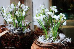 Impressionen Winter in Kitzbühel Winter, Plants, Winter Time, Flora, Plant, Winter Fashion, Planting