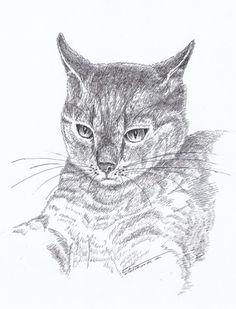 Kot. Grafika piórkiem, autor Grzegorz Fuławka. Można tego kota... nosić na koszulce! Zapraszam :)