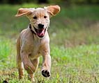 Your Puppy: What to Expect at 4 to 6 Months