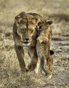 Mama leona
