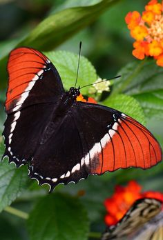 In this four-part series, Necie Edwards offers tips on how to feel better with fibromyalgia. Butterfly Pictures, Cute Butterfly, Flower Images, Butterfly Wings, Beautiful Butterflies, Pretty Flowers, Colorful Flowers, Butterfly Chrysalis, How To Calm Nerves