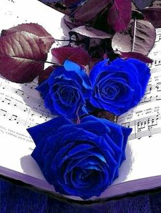 Roses for Conejo Colorful Roses, Exotic Flowers, Pretty Flowers, Blue Flowers, Purple Roses, Blue Roses Wallpaper, Butterfly Wallpaper, Aesthetic Roses, Blue Aesthetic