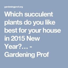 Which succulent plants do you like best for your house in 2015 New Year?… - Gardening Prof