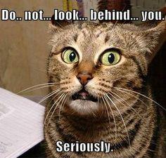 NON ti girare... non guardare.... dietro di te. Sul serio!