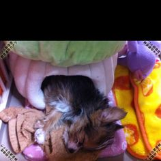 Sleep and grow up! My little puppy