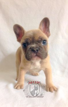 Pros And Cons Of Co Owning A Breeding Dog