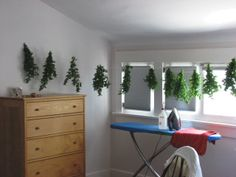 Drying mint from herb garden