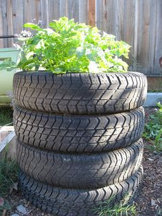 Vertical potato tower growing idea - grow potatoes in stacked tires for insulation and storage and vertical growing.