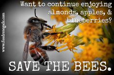 According to recent industry survey, next year there WILL NOT BE ENOUGH bees to pollinate our almond, apple, and blueberry crops. These crops will fail, not because of poor weather or bad growing conditions, but because of lack of bees!