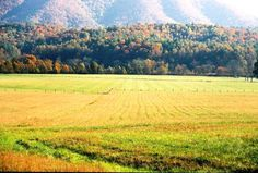 Step-By-Step Guide to the Cades Cove Loop Road Alaska Travel, Alaska Cruise, Mountain Vacations, Viewing Wildlife, Tennessee Vacation, Great Smoky Mountains, Smokey Mountain, Cades Cove, Travel Light