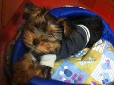 Cutie !!