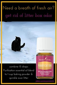 Cat lovers listen up! How to freshen the litter box using essential oils. One more way to use Young Living's Purification. Click to find out more about essential oils and pets.