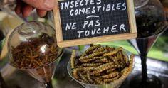 Gare aux insectes dans vos assiettes !
