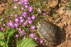 Visit the post for more. West Coast, Tortoise, Roads, South Africa, Cape, National Parks, Quilt, Flowers, Plants