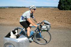 cesta de bicicleta para perros - Buscar con Google