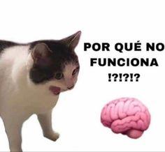 R Lol, Clean Memes, Pinterest Memes, Coping Mechanisms, How To Speak Spanish, Stickers, Meme Faces, Otaku Anime, Reaction Pictures