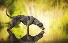 Reflection by Wolfskuss.deviantart.com on @DeviantArt