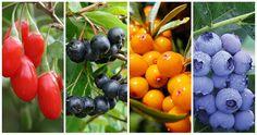 Garden Ideas Under Trees, Valentines Day Cakes, Gardening Tips, Fruit, Flowers, Blog, Diet, Decor, Decoration