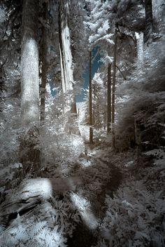 Baker Lake path, WA, USA byVisioni Italiane Infrared photography