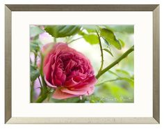 Leinwandbild mit romantischem Rosenbild im Garten