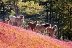 Đồng cỏ hồng Đà Lạt #Travel #Dalat #LamDong