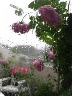 Rainy day in Oslo ~ © Kari Meijers