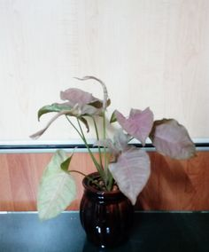 Nursery, Green, Nature, Flowers, Plants, Naturaleza, Baby Room, Child Room, Plant