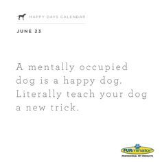 A mentally occupied #dog is a #happy dog. Literally teach your dog a new #trick.