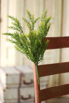 """20"""" Tuscan Bush - Green ($10.95)"""