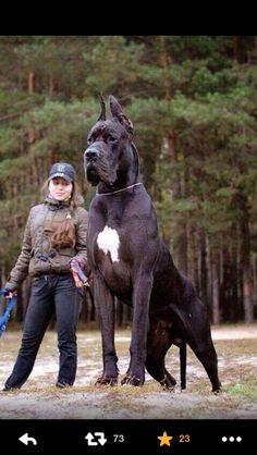 Big ass dog!