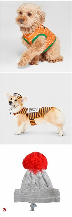 Shop Target for pet Cute Animal Memes, Animal Jokes, Cute Animal Videos, Cute Funny Animals, Chien Halloween, Dog Halloween, Baby Animals Super Cute, Cute Little Animals, Baby Animals Pictures
