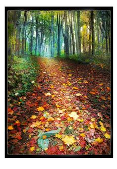 Where leaves gather 10x14 road less by dahliahousestudios on Etsy, $99.00